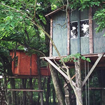 Tree House Camping in Tochigi